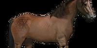 Namibian Horse