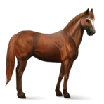 Quarter Horse.Fuchs.Altes Design