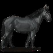 Nokota Pferd Rappe