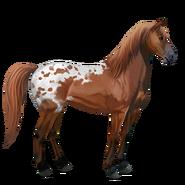Mustang Fuchsschecke Alt