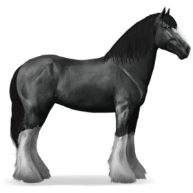 Shire Horse Rappe.png