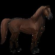 Mustang Dunkelfuchs Alt