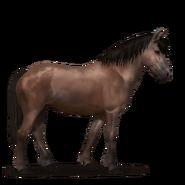 Neufundland Pony Dunkelfuchs
