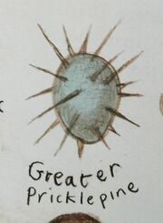 GreaterPricklepineEgg