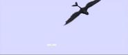 CGI Tooth Physics of Flight 2 Animators Corner