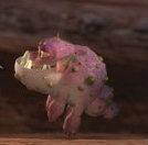 A Pink Gronckle