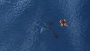 Trapped Seashocker 101