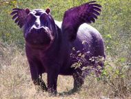 360325-allknowing flying purple hippo by fifimaxi super