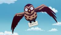 Owl NPC 2011