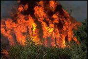Wildfire (4)
