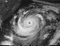 Typhoon (1)