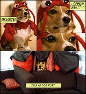 Dogfortredlobster