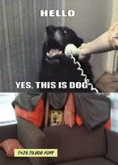 Helloyesthisisdog
