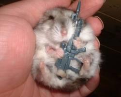 File:Prepare for the Vietnam war 2! Hamster style!.jpg