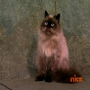 File:Harmoo the kitty.png