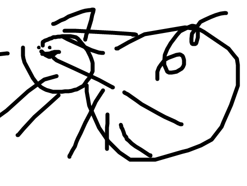 File:Ace's Cat.png