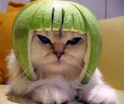 File:Helmet.jpg