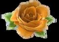 Larger yellow rose