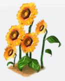 Dino sunflowers