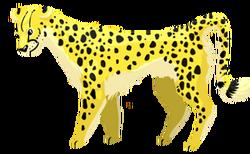 Cow cheetah