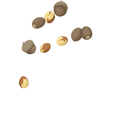 File:Acorns.png
