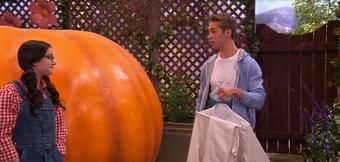Next of pumpkin 5