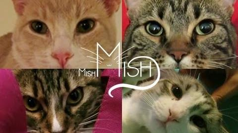 WeAreMishMish