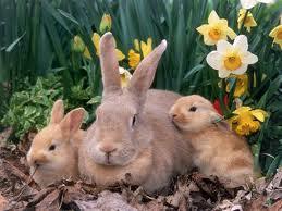 File:A few rabbits.jpg