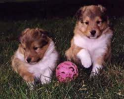 File:Cute pups.jpg