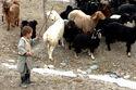 Little Shepherd, Panjshir Valley, Afghanistan, 01-25-2007