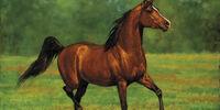 Cadoc (horse)
