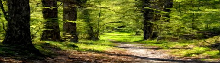Initium ForestPath