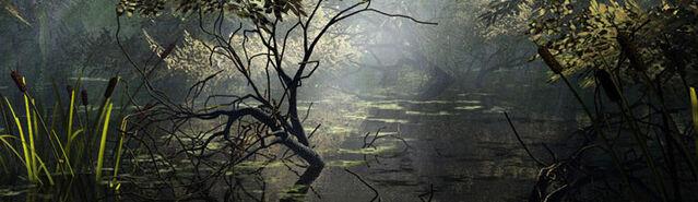 File:Banner---swamp.jpg