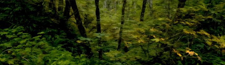 Banner---dense-forest1