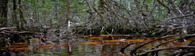 File:Banner---swamp3.jpg