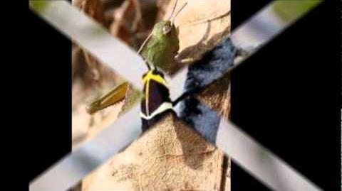 My Movie Grasshopper life Cycle Final.wmv-0