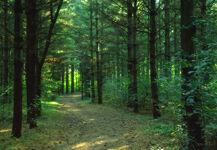 Cardozo Residence15 forest border (Cardozo property)