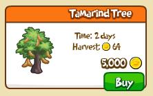 Tamarind tree shop