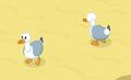 Seagull adult