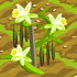 Vanilla Plant 70