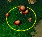 File:Mushroom Colony.png