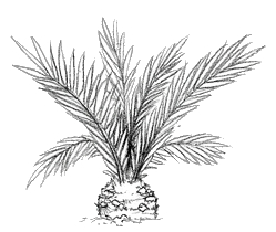 File:Cycad The Isle.png