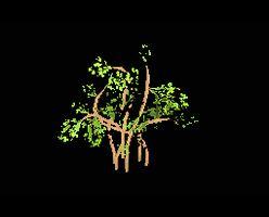 Tree swampy
