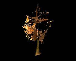 Tree Fall Orange Maple