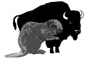 352px-18. Giant Beaver to scale with Bison