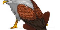 Gee-Gee Bird