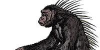 Spiny-Backed Chimpanzee