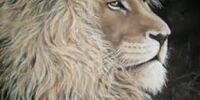 Peruvian Jungle Lion