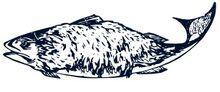 Furbearingfish
