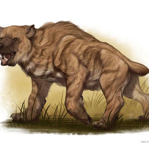 Other description of Nandi Bear.